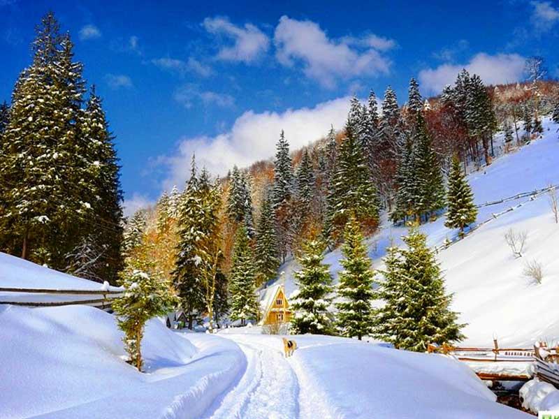 Карпаты зимой2